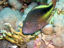 Het bewaken van vissen stock afbeeldingen