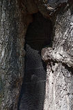 Het bewaren van een boom Stock Fotografie