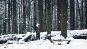 Het bewegen van Afgelopen Bos in de Sneeuw stock video