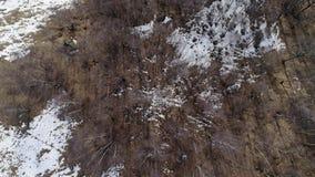 Het bewegen vooruit zich boven over het naakte bos van het dalingshout en sneeuwberg in de herfst of de winterdag Openlucht zonni stock footage