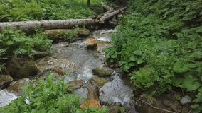 Het bewegen zich neer met water in boswaterval stock foto