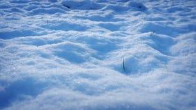 Het bewegen zich over Sneeuw met Grasspruiten die door porren stock footage