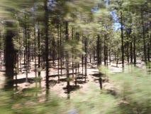 Het bewegen zich snel in het bos Stock Afbeeldingen