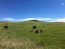 Het bewonderen van de enorme weilanden van zuidelijke Alberta met vrije waaier royalty-vrije stock fotografie
