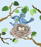 Het bewonderen van het Nest Royalty-vrije Stock Foto