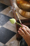 Het bidden handen royalty-vrije stock fotografie