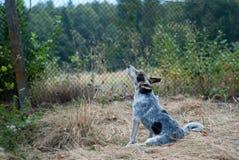 Het bidden Hond stock foto's