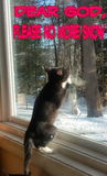 Het bidden katje Royalty-vrije Stock Fotografie