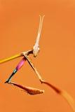 Het bidden mantises Stock Foto's