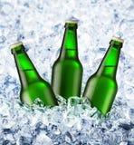 Het bier is in ijs Stock Afbeelding