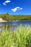 Het Bighorn Nationaal Bos van het Sibleymeer Stock Foto