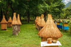 Het bijenbewijsmateriaal van een ongebruikelijke vorm is in de opheldering in het bos royalty-vrije stock foto's