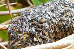 Het bijenwerk aangaande honingraat Stock Foto
