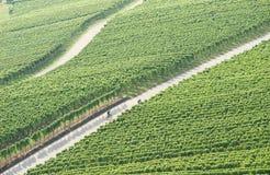 Het biking van de wijngaard Royalty-vrije Stock Afbeelding
