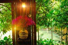 Het binnenland, de vazen van de orchideeinstallatie met mooie purpere bloesems met verlichtingsgloed voert op venster uit Royalty-vrije Stock Afbeeldingen
