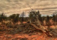 Het binnenland van Australië stock foto