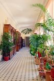 Het binnenland van het bureaugebouw, met tropische installaties wordt verfraaid die Verticale Fotografie stock fotografie
