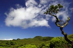 Het binnenland van het eiland Pico. Stock Foto