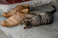 Het binnenlandse leuke katje spelen met schoenveters stock foto's