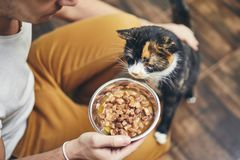 Het binnenlandse leven met kat stock foto's