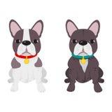 Het binnenlandse ras van de hond Franse Buldog op de witte achtergrond Royalty-vrije Stock Foto