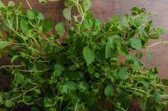 Het biobeeld van het oregoproduct Stock Fotografie