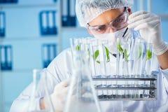 Het biotechnologieconcept met wetenschapper in laboratorium stock foto