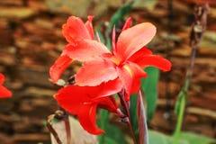 Het blad en de bloem van Cattleyaorchideeën stock afbeelding