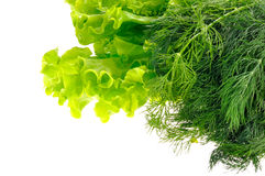 Het blad en de dille van de salade stock afbeeldingen