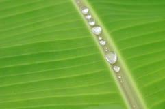 Het blad en het waterdaling van de banaan Royalty-vrije Stock Afbeeldingen