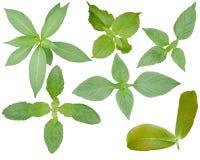 Het blad isoleerde achtergrond groene bladerenkleur royalty-vrije stock afbeeldingen
