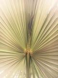 Het blad kijkt als een Pauw om zijn staart uit te spreiden Stock Afbeelding