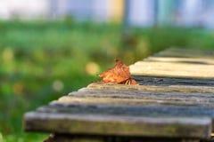 Het blad ligt op de bank in de herfst Stock Foto