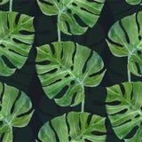 Het blad naadloos patroon van waterverfmonstera Royalty-vrije Stock Foto's