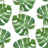 Het blad naadloos patroon van waterverfmonstera Stock Foto