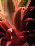 Het blad van de ananas stock fotografie