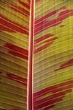 Het blad van de banaan stock foto's