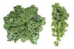 Het blad van de boerenkoolkool Groen plantaardig Gezond het eten Super voedsel stock foto's
