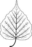 Het Blad van de boom Royalty-vrije Stock Foto's