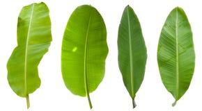 Het Blad van de boombanaan op Witte/het knippen weg wordt geïsoleerd die royalty-vrije stock afbeeldingen