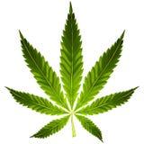 Het blad van de cannabis Stock Foto