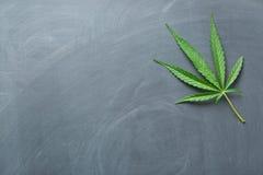 Het blad van de cannabis royalty-vrije stock foto