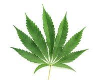 Het blad van de cannabis stock afbeeldingen