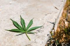 Het blad van de cannabis Royalty-vrije Stock Afbeeldingen