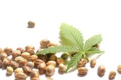 Het Blad van de cannabis met Zaden Stock Afbeeldingen