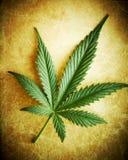 Het blad van de cannabis op grungeachtergrond. Royalty-vrije Stock Foto