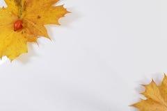 Het blad van de de herfstesdoorn en wilde die heup op witte backgound wordt geïsoleerd Stock Afbeelding