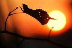 Het blad van de de zonsondergangzon van de herfst Royalty-vrije Stock Foto