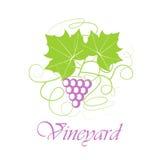 Het blad van de druivenbes Royalty-vrije Stock Fotografie