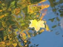 Het blad van de esdoorn, de herfst De fotografie van de studio Stock Foto's